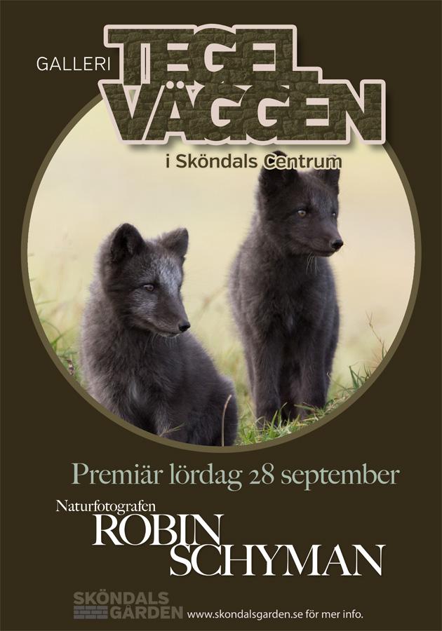 reklam_robin_900b